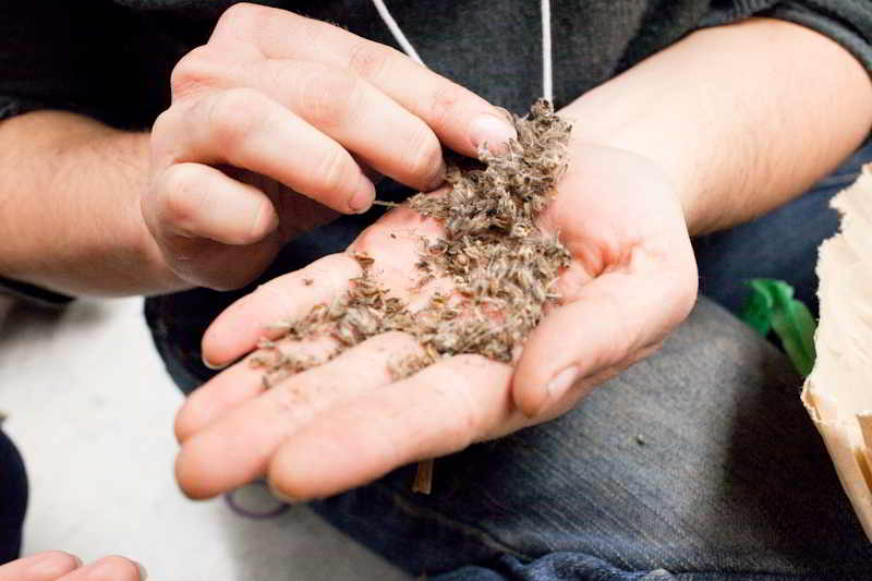 BC Seeds wp-2