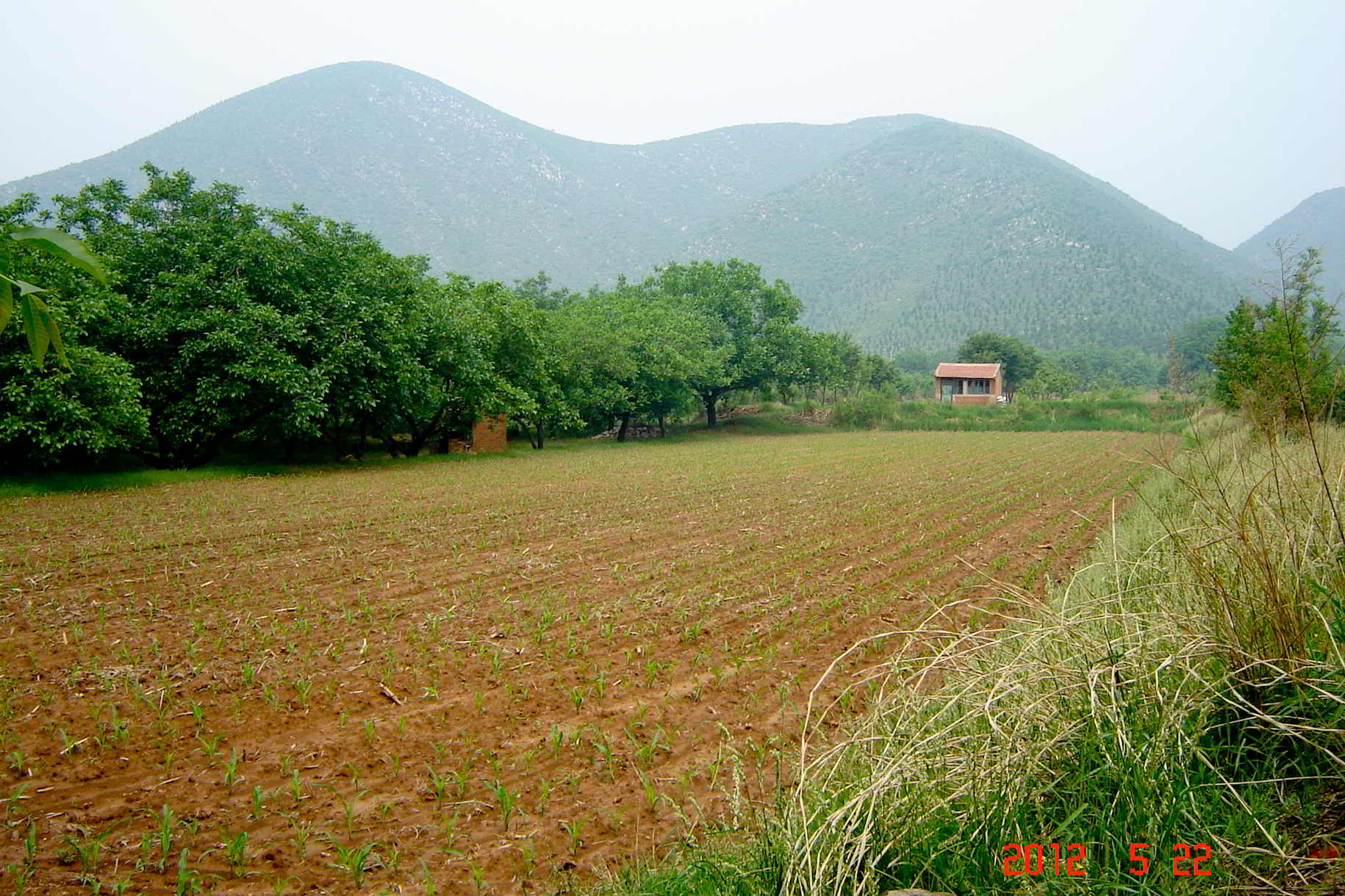 Heather's Beijing Farm Pic-1