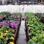 SOLEFood Farms Tour & Hive Potluck