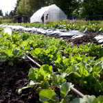 North Vancouver: Edible Garden Project and Loutet Farm Tour & Potluck