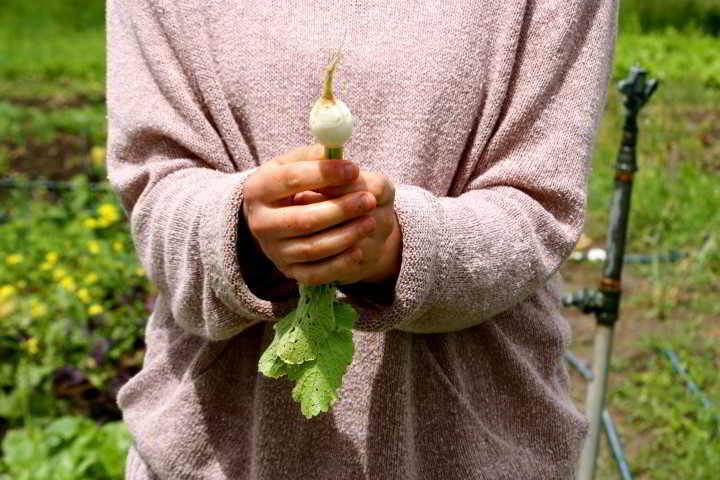 Abra holding turnip