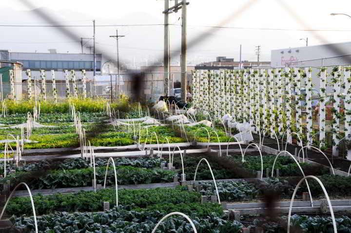 solefoodstreetfarms-1