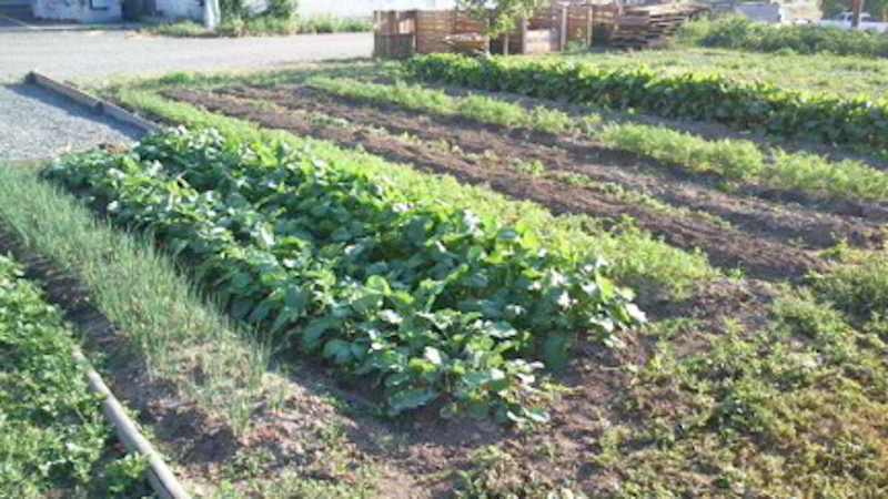 Puddle Produce-5