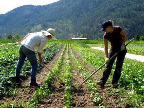 Farm-064