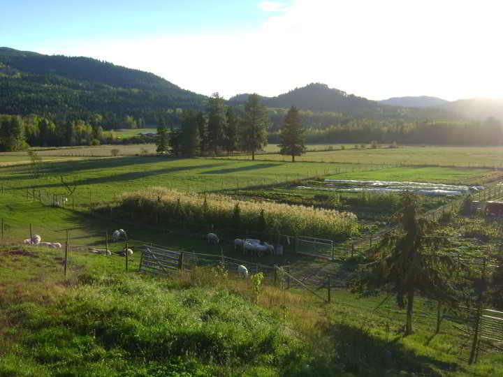 Farm & CSA 2010 066