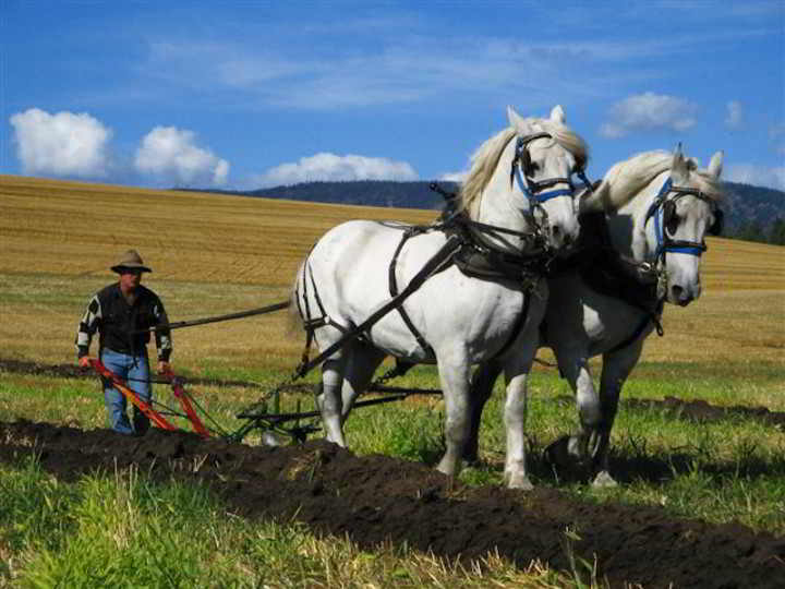 Ploughing Contest-11