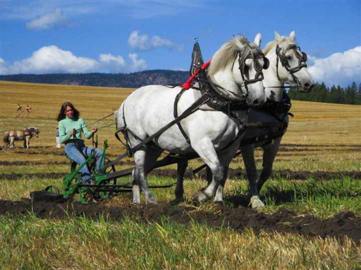 Ploughing Contest-12