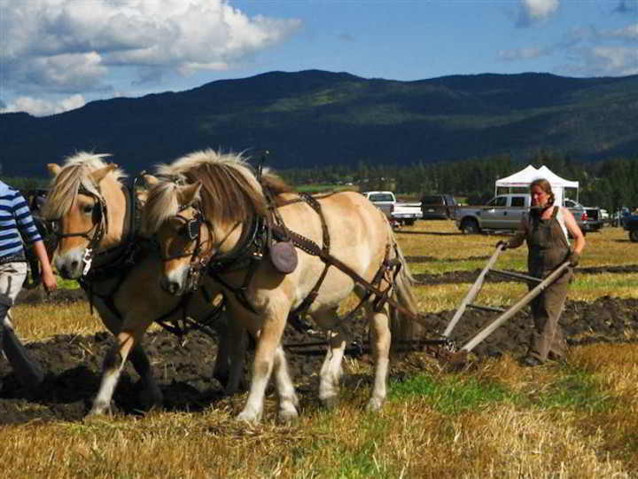 Ploughing Contest-2