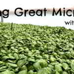 Nov 22: Growing Great Microgreens Workshop with Chris Thoreau