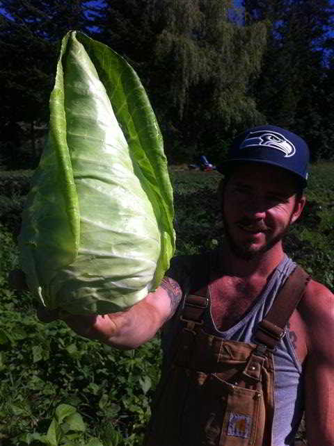 From left to right: Summer Cabbage. Ryan.