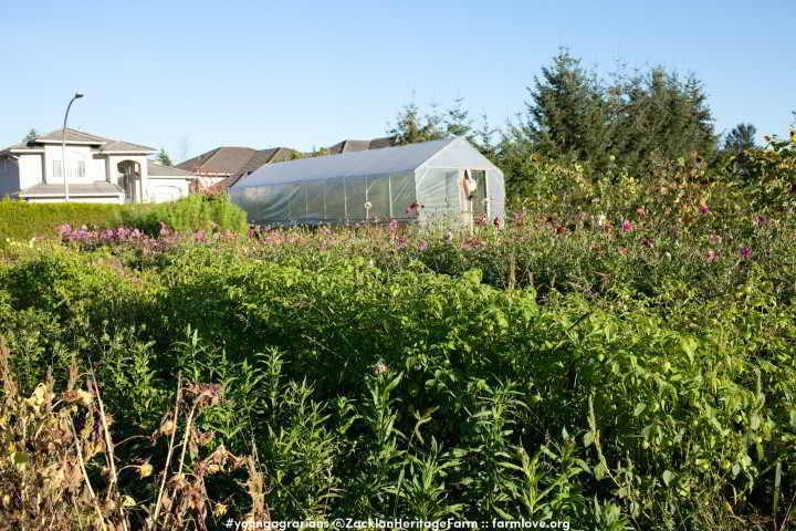 YA Zaklan Heritage Farm 2014-16