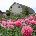 JOB: Earthwise Organic Farm Intern, Tsawwassen, BC