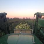 JOB: Farm Hands at Cropthorne Farms – Ladner, BC