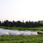 INTERNSHIP: The BeetBox Market Garden, Buckingham, QC