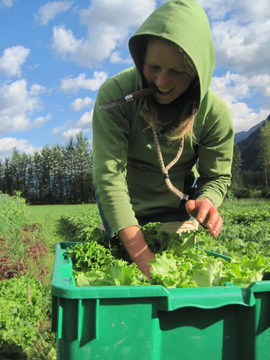 Rootdown Farm Harvest