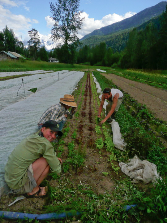 Rootdown Farm Field Staff-1