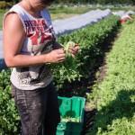 Decompte final pour l'evenement des jeunes cultivateurs de la region d'Ottawa-Outaouais