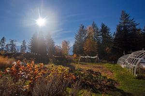 fall-scenes_08-garden copy