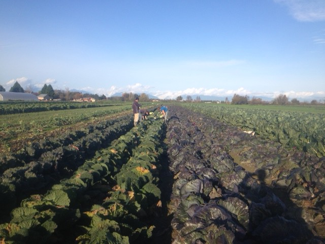 Cropthorne Farm - Delta Farm Tour