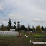 JOB: Cowichan Agriculture Training Supervisor, Duncan, BC (Position Filled)