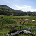 APPRENTICESHIP: Slow Train Farm, Williams Lake, BC