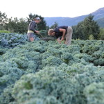 JOB: F/T Farm Worker, Plenty Wild Farms, Pemberton, BC (Position Filled)
