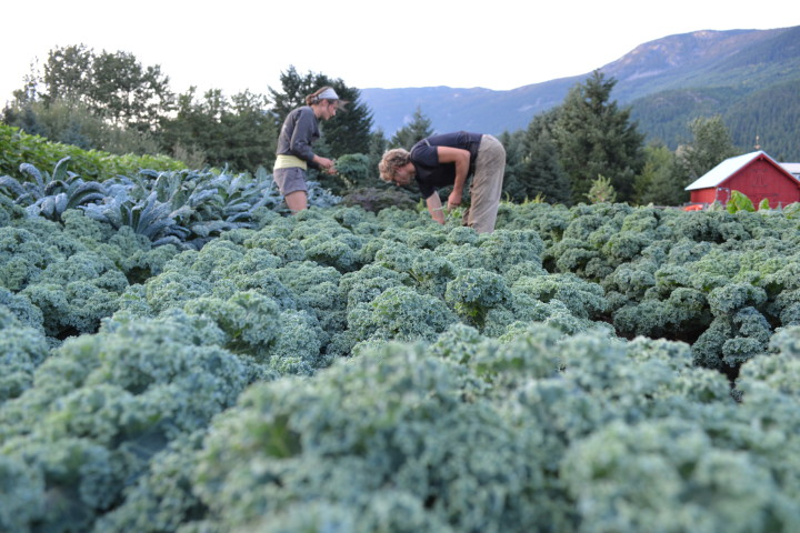 Harvesting at Plenty Wild Farm Jobs