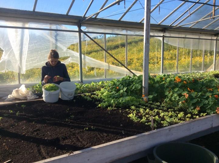 Zocalo Organics - Greenhouse