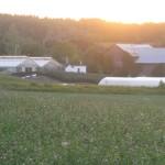 INTERNSHIP: Zocalo Organics, Hillsburgh, Ontario