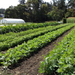 JOB: P/T Farm Help, Square Root Farm, Central Saanich, BC