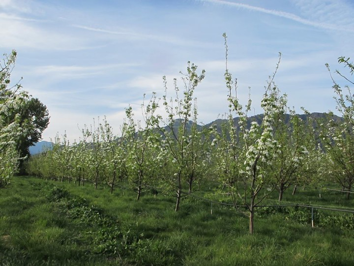 Twisted Hills Orchard