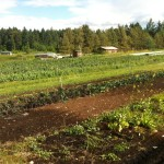 JOB: Field Manager, Nanoose Edibles Organic Farm, Nanoose Bay, BC