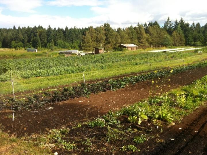 Nanoose Edibles Organic Farm