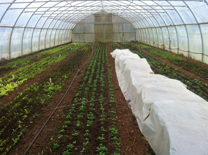 Greenhouse Nanoose Edibles Organic Farm