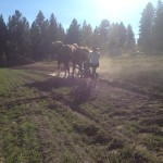 September 20: Horse & Tractor Ploughing Workshop, Armstrong BC