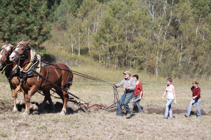Deerfoot Farm - Horse Ploughing
