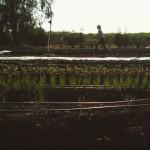 July 6: Introduction to Organic Certification, Farm Tour & Potluck, Richmond, BC