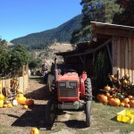 SEPTEMBER 12: Golden Ears Farm Annual Corn Roast, Chase, BC