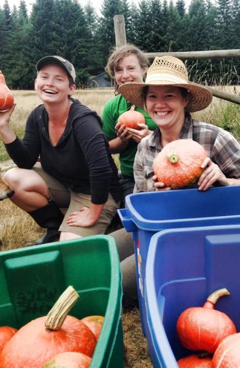 Squash Harvest - Merville Organics Pie Potluck Young Agrarians Event