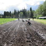 The 2016 UBC Farm Practicum in Sustainable Agriculture – Apply Now!