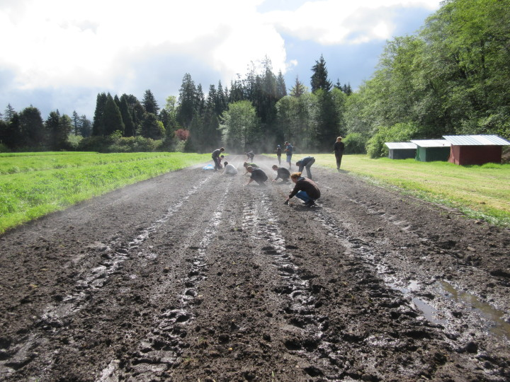 Students working the field at UBC Farm Practicum in Sustainable Agriculture