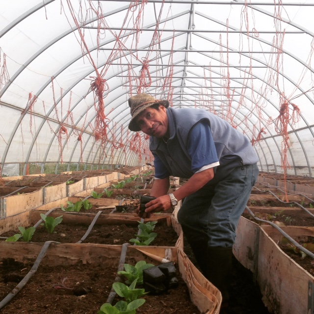Sole Food Street Farm Job Young Agrarians