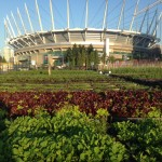 JOB: Director of Operations, Sole Food Street Farms, Vancouver BC