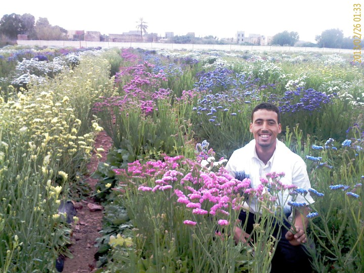 Young Flower Field of Agrarian Abdellah Boudhira an Organic Farmer in Morocco