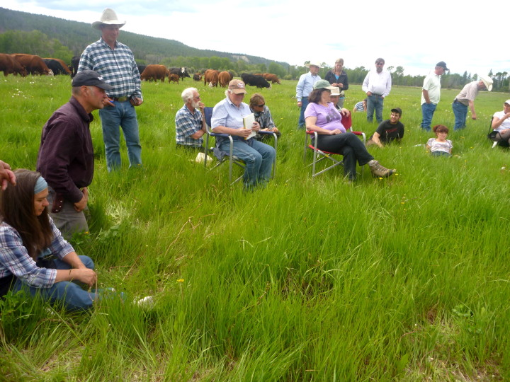 Old and Young agrarian ranchers gather in a green grassy field where an on farm field day inspired the applied sustainable raching certificate program
