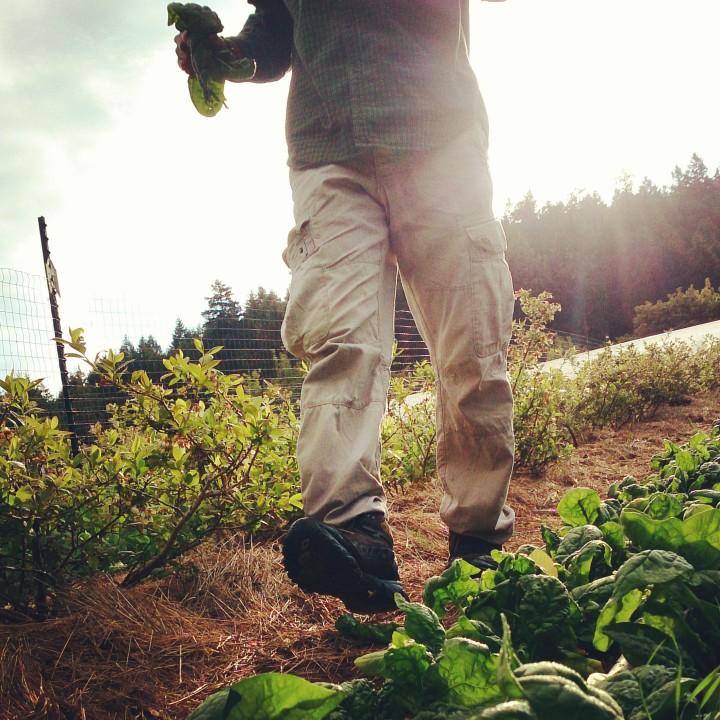 HarvestAp_YA_article