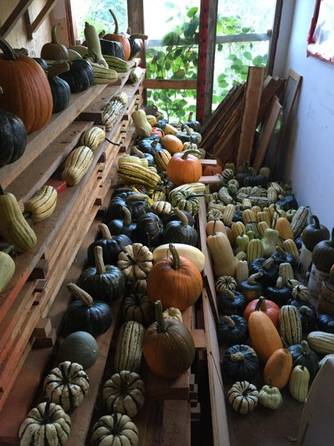 An abundance of squash is stored at Granite Bay Farm on Quadra Island