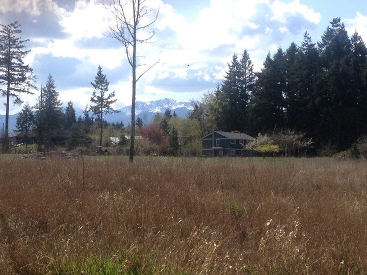 Field view of Salt & Harrow organic Farm on Vancouver Island