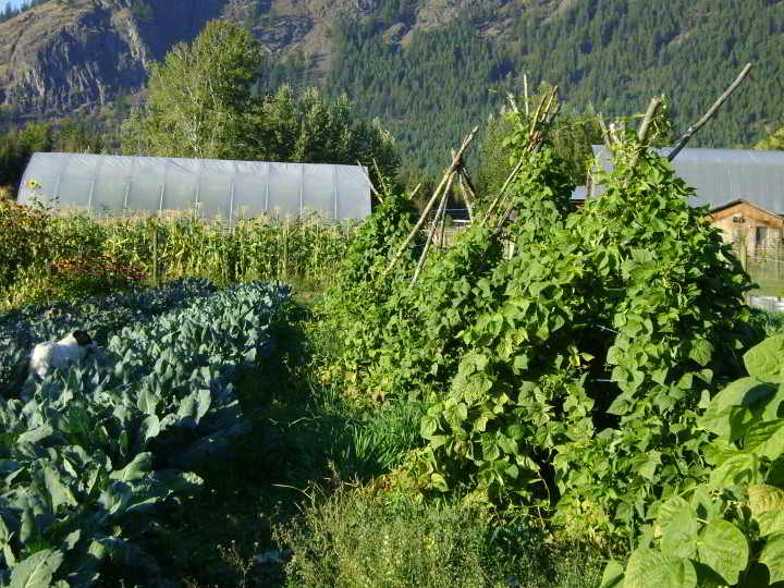 Garden in full swing at Ranfurly Farms, Turtle Valley near Chase, BC.