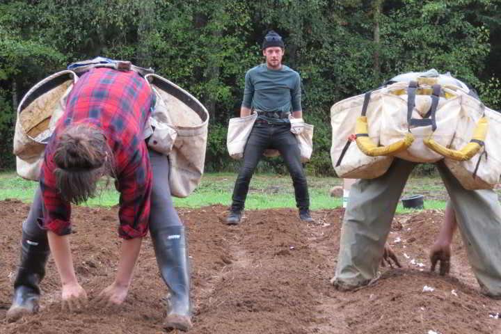 Three field hands help plant at Lentelus Organics at Minto Farm